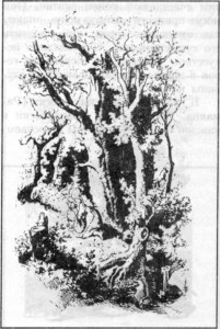 Чудесный лес1